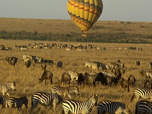Home Coming Offer - Maasai Mara Photos