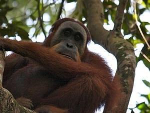 2 Days Bukit Lawang Jungle Trek Fotos