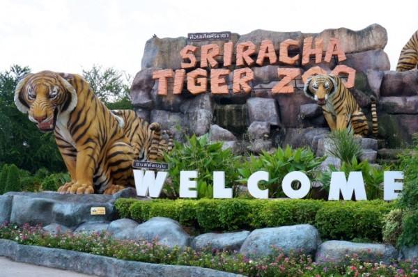 Coral island + Sriracha Tiger Zoo Day Tour Photos