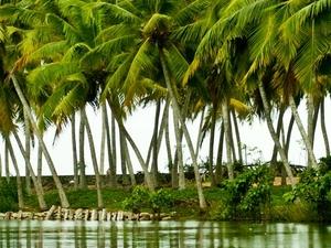 Book Kerala Tour Before 31st Jan 14 and Get Boat Ride at Lake Periyar Free Photos