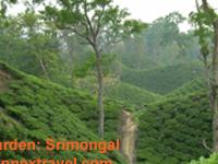 Tea Garden & Tribal Culture