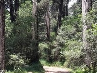 Menagesha Suba Forest Park