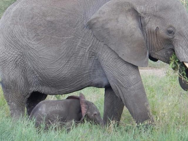 Africa Safari with Vervet Safari Tours Photos