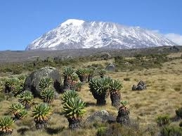 Climb Kilimanjaro Photos