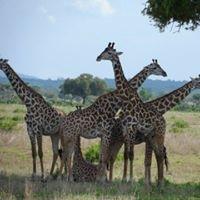 Usambara Expeditions Photo