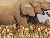 Kenya Vacations Safaris