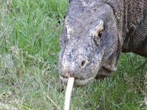 Flores Komodo Tour Package Photos