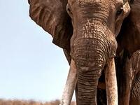 Wildlife Safari to the Kruger Park Region