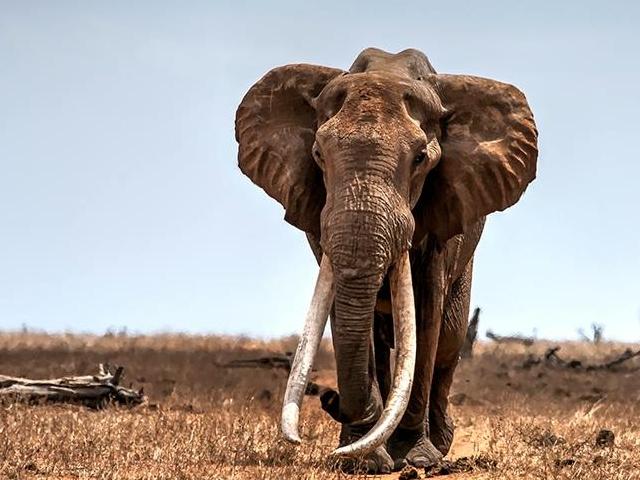 Wildlife Safari to the Kruger Park Region Photos