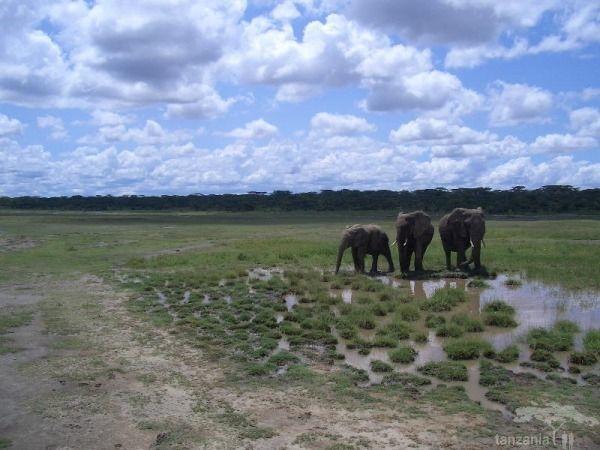Best of East Africa Kenya/Tanzania Safaris Photos