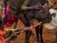 12 Days Safari to Kenya's High Country