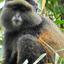 Itravelrwanda