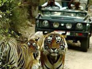 Adventure India - Wildlife Escapades !! Photos