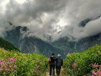 Himalayan Trails - Valley of Flowers Trek