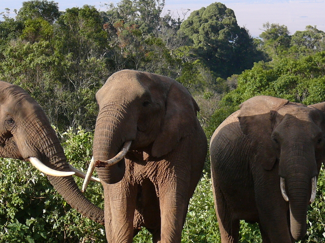 8 Days 7 Nights Classic Kenya Safari Photos