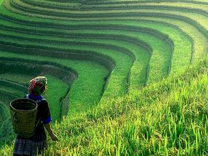 Vietnam Tour Package - Hanoi, Sapa & Halong Bay Photos