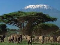 Amboseli, Tsavo West, East Safari