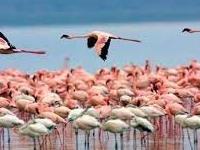 Lake Naivasha Lake Nakuru Tour