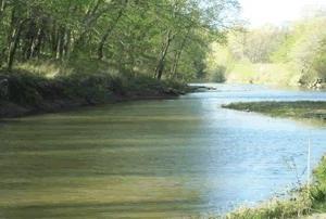 Nutria de río