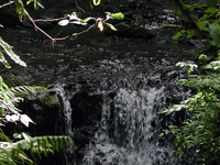 Balch Creek