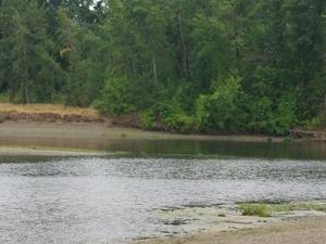 Calapooia Río