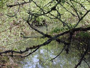 Ellos Creek
