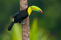 3-Day Amazon Jungle Tour at Posada Amazonas Photos