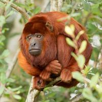 3-Day Amazon Jungle Tour at Hacienda Concepción Photos