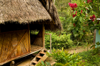 3-Day Iquitos Amazon Jungle Adventure at Ceiba Tops Luxury Lodge Photos