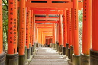 3-Day Kyoto and Hiroshima Independent Tour by Nozomi Bullet Train from Tokyo Photos