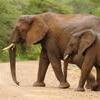 4-Day Kruger National Park Safari Adventure