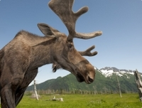 Anchorage Shore Excursion: Post-Cruise Transfer and Tour from Whittier to Anchorage Photos
