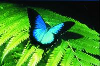 Australian Butterfly Sanctuary Photos