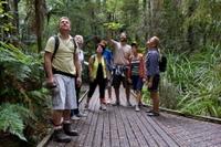 Bay of Islands Shore Excursion: Puketi Rainforest Guided Walk Photos