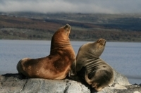 Beagle Channel and Seal Island Catamaran Tour from Ushuaia Photos