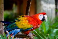 Belize City Shore Excursion: Belize Zoo and City Tour Photos