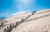 Bordeaux Super Saver: Small-Group Trip to Arcachon with Oyster Tasting and Lunch plus Médoc Wine Tour Photos