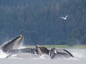 Juneau Shore Excursion: Whale-Watching Cruise and Glacier Flight Photos