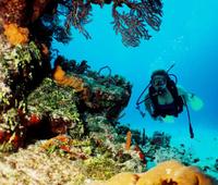 Cancun 2-Tank Reef or Wreck Dive Photos
