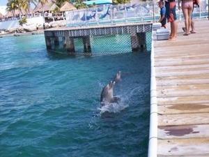 Cancun Dolphin Swim Adventure Photos