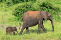 Chobe National Park 4x4 Game Drive with Transport from Kasane Photos