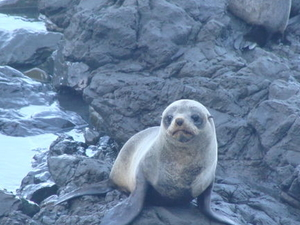 Kaikoura Swim with Dolphins Tour from Christchurch Photos