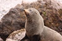 Dunedin Shore Excursion: Small-Group Tour of Dunedin and the Otago Peninsula Photos