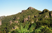 Great Barrier Island Tour including return flights from Auckland