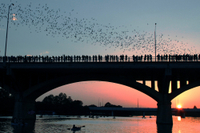 Haunted Austin and Bat Bridge Segway Tour Photos