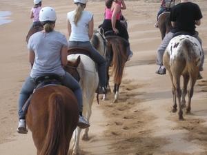 Horse Riding Tour from Cairns Photos