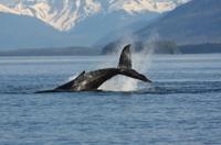 Juneau Whale-Watching Adventure Photos