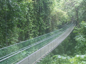 Roatan Shore Excursion: Hanging Bridges Eco Tour and Beach Break Photos