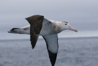 Kaikoura Albatross Encounter Tour from Christchurch Photos