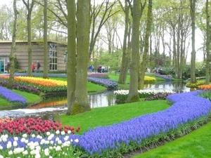 Amsterdam Shore Excursion: Keukenhof Gardens and Tulips Fields Tour Photos
